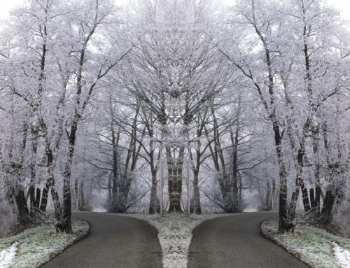 The road not taken – Robert Frost